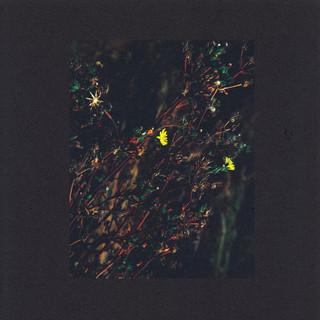 The Passenger / The Walker (Roman Flugel Remix)