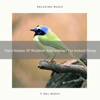 Hard Noises Of Weather And Animals For Instant Sleep