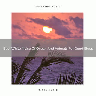 Best White Noise Of Ocean And Animals For Good Sleep