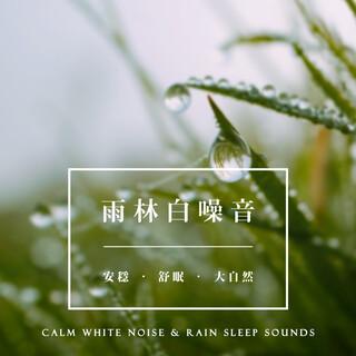 雨林白噪音:安穩.舒眠.大自然 (Calm White Noise & Rain Sleep Sounds)