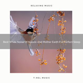 Best White Noise Of Nature And Mother Earth For Perfect Sleep