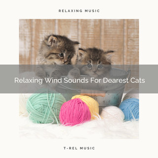 Relaxing Wind Sounds For Dearest Cats