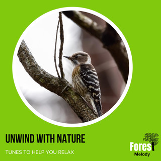 Unwind With Nature - Tunes To Help You Relax