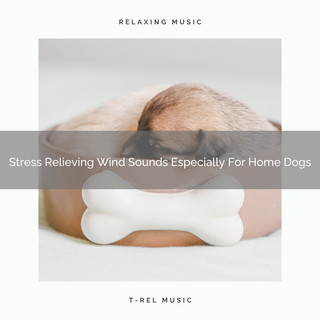 Stress Relieving Wind Sounds Especially For Home Dogs