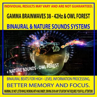 Gamma Brainwaves 38 - 42Hz & Owl Forest