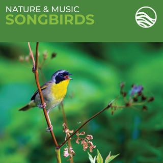 Nature & Music:Songbirds