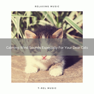 Calming Wind Sounds Especially For Your Dear Cats