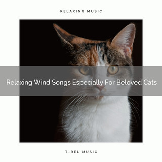 Relaxing Wind Songs Especially For Beloved Cats