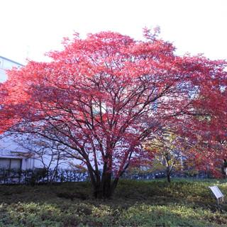 ふるさとの木で森を作ろう feat.GUMI (Furusato No Ki De Mori Wo Tsukurou (Let's Make Forest by Homeland Trees) (feat. GUMI))