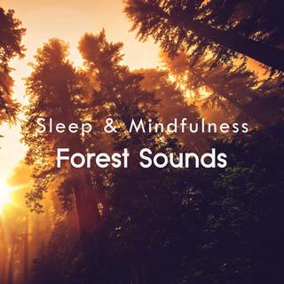 Forest Sounds (Sleep & Mindfulness)