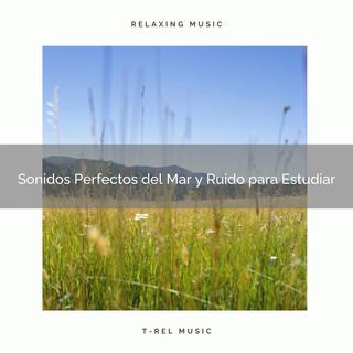 Sonidos Perfectos Del Mar Y Ruido Para Estudiar